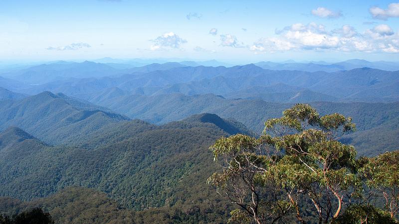 オーストラリアのゴンドワナ雨林の画像22
