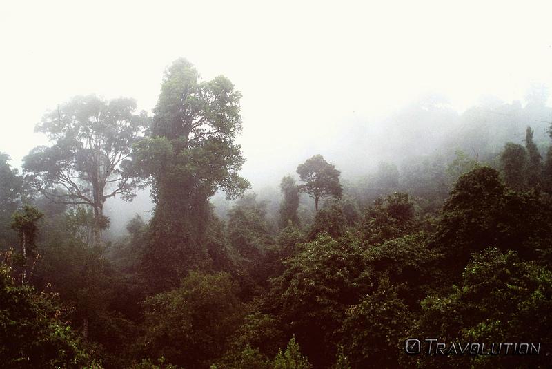 オーストラリアのゴンドワナ雨林の画像28