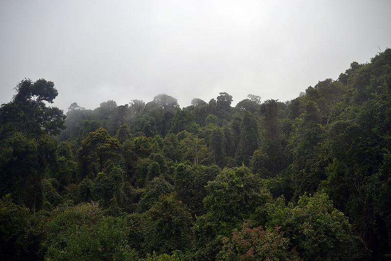 オーストラリアのゴンドワナ雨林の画像30
