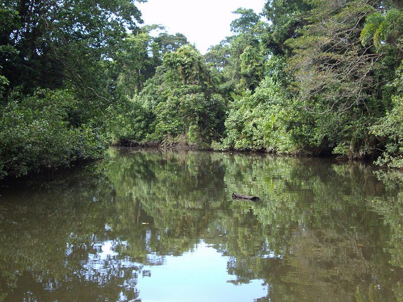 クインズランドの湿潤熱帯地域の画像5