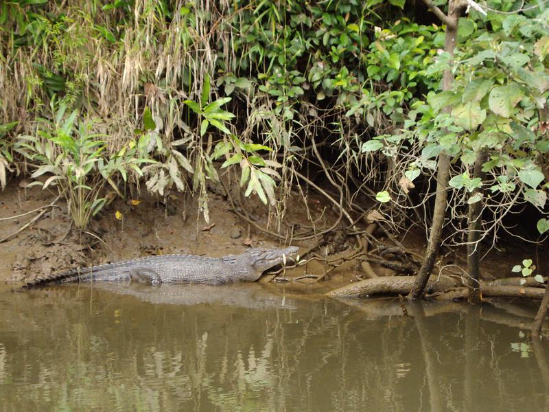 クインズランドの湿潤熱帯地域の画像6