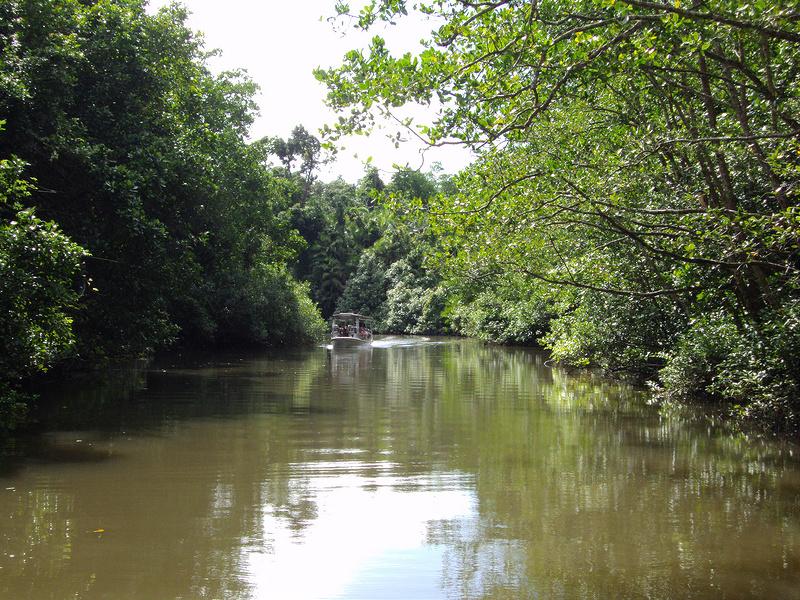 クインズランドの湿潤熱帯地域の画像7
