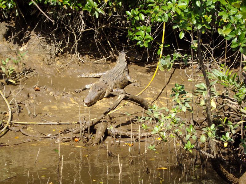 クインズランドの湿潤熱帯地域の画像8