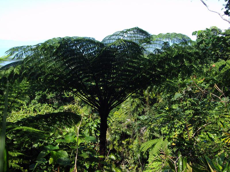 クインズランドの湿潤熱帯地域の画像10