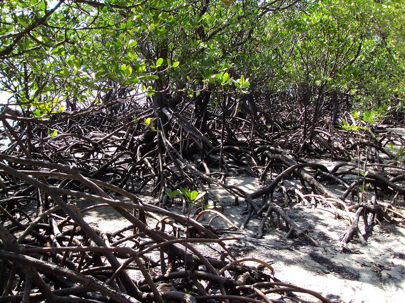 クインズランドの湿潤熱帯地域の画像12