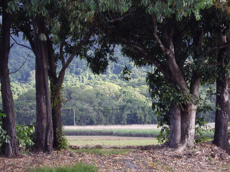 クインズランドの湿潤熱帯地域の画像13