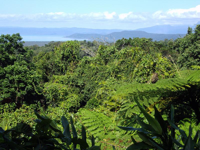 クインズランドの湿潤熱帯地域の画像17