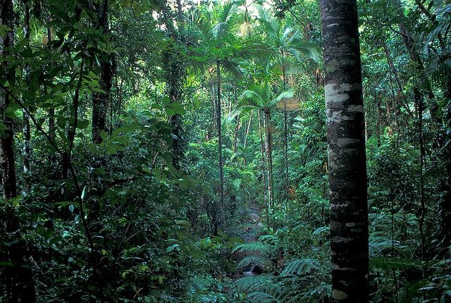 クインズランドの湿潤熱帯地域の画像21