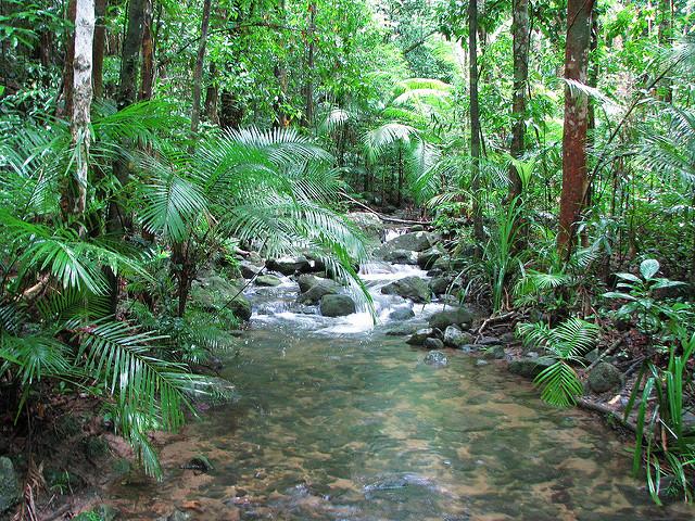 クインズランドの湿潤熱帯地域の画像25