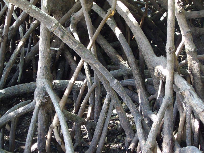 クインズランドの湿潤熱帯地域の画像27