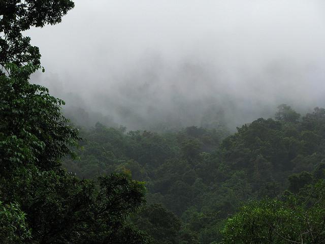 クインズランドの湿潤熱帯地域の画像28