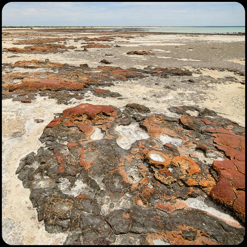 西オーストラリアのシャーク湾の画像4