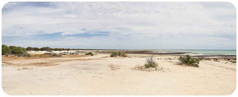 西オーストラリアのシャーク湾の画像6
