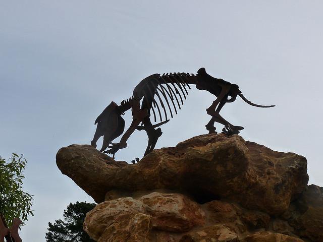 オーストラリアの哺乳類化石地域(リヴァーズレー/ナラコーアテ)の画像4