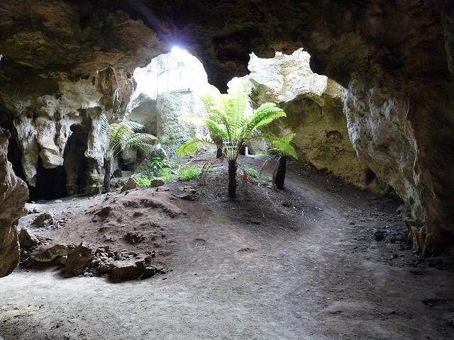 オーストラリアの哺乳類化石地域(リヴァーズレー/ナラコーアテ)の画像8