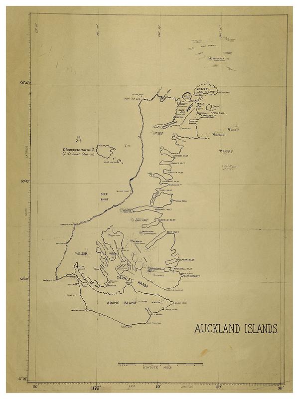 マッコーリー島の画像5