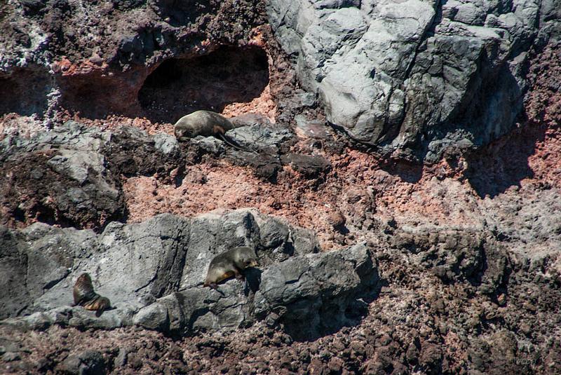 マッコーリー島の画像9