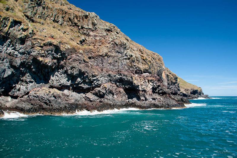マッコーリー島の画像10