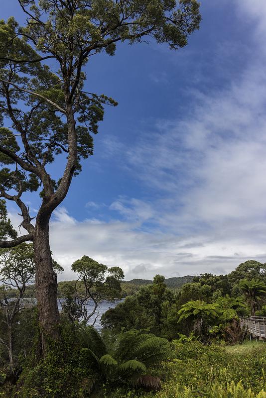 マッコーリー島の画像12