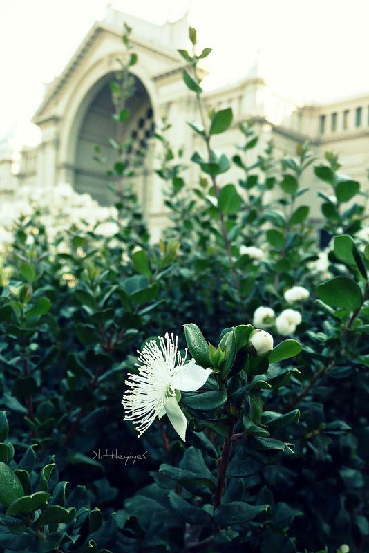 王立展示館とカールトン庭園の画像11