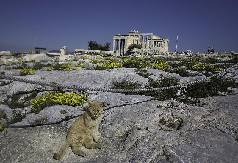 アテネのアクロポリスの画像22