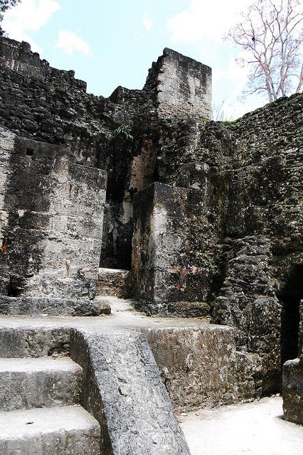 ティカル国立公園の画像8