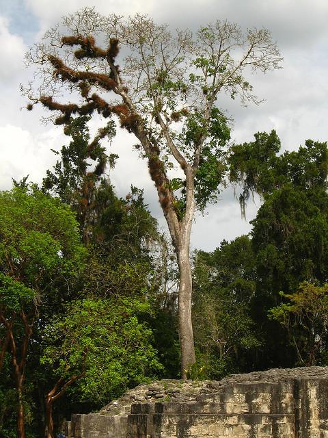 ティカル国立公園の画像12