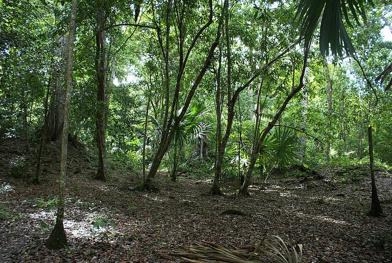 ティカル国立公園の画像14