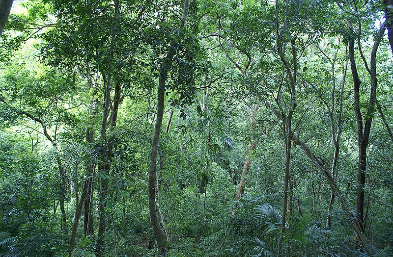 ティカル国立公園の画像15