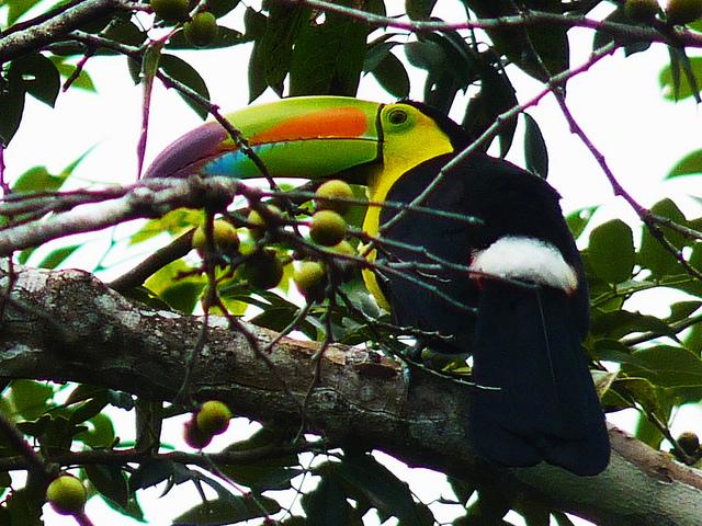 ティカル国立公園の画像17