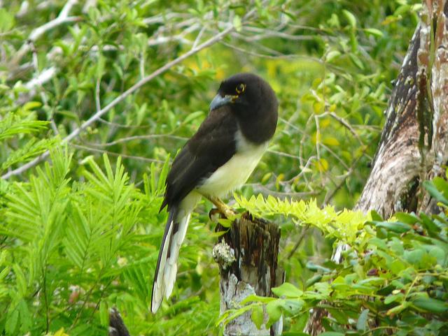ティカル国立公園の画像18