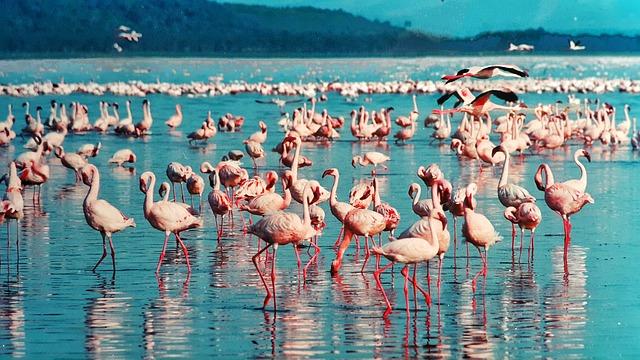 大地溝帯にある ケニアの湖沼群の画像12