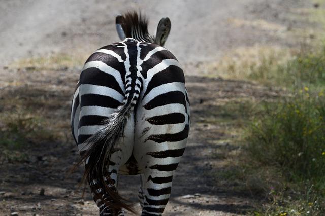 大地溝帯にある ケニアの湖沼群の画像13