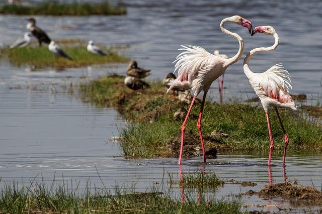 大地溝帯にある ケニアの湖沼群の画像14