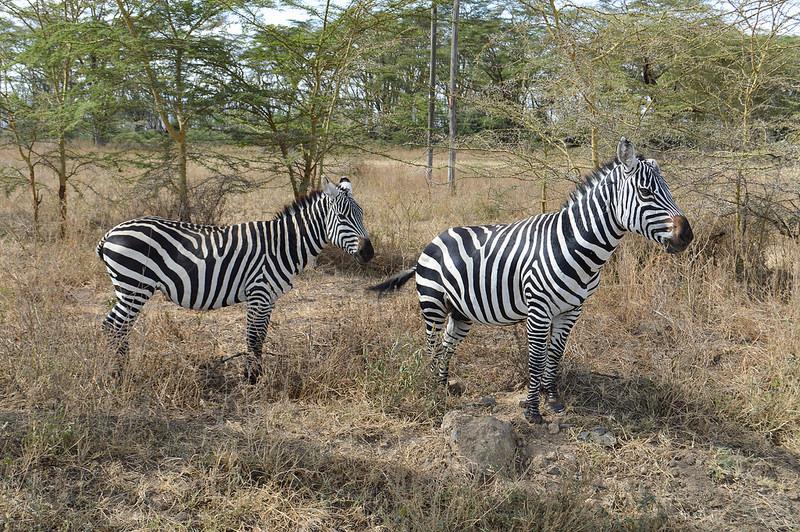 大地溝帯にある ケニアの湖沼群の画像16
