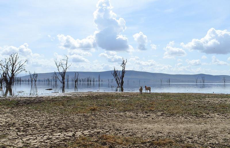 大地溝帯にある ケニアの湖沼群の画像18