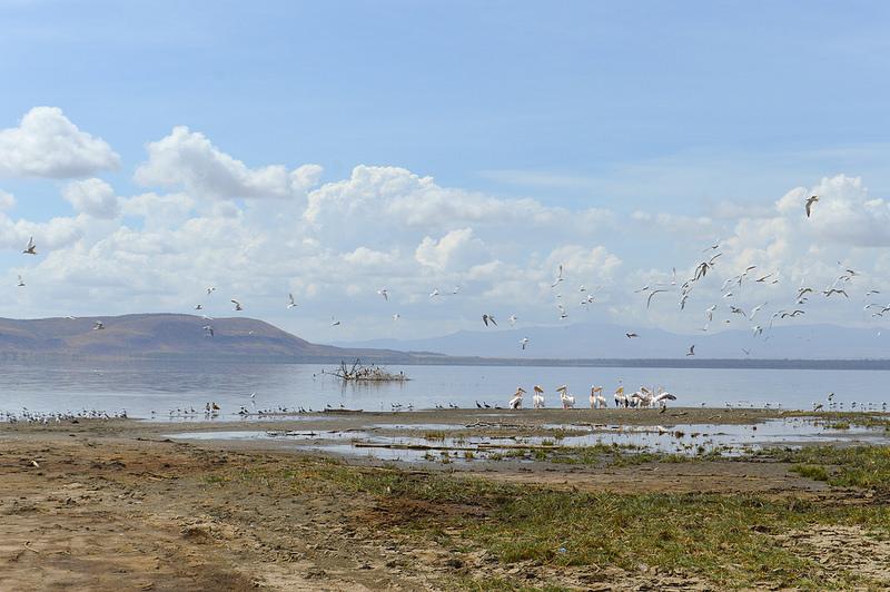 大地溝帯にある ケニアの湖沼群の画像19