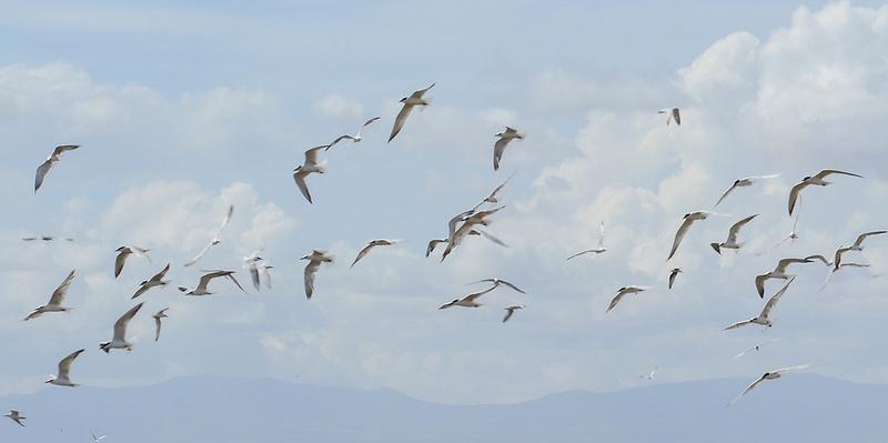 大地溝帯にある ケニアの湖沼群の画像20
