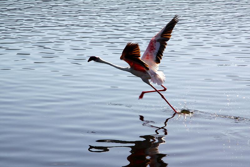 大地溝帯にある ケニアの湖沼群の画像21