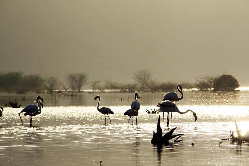 大地溝帯にある ケニアの湖沼群の画像26