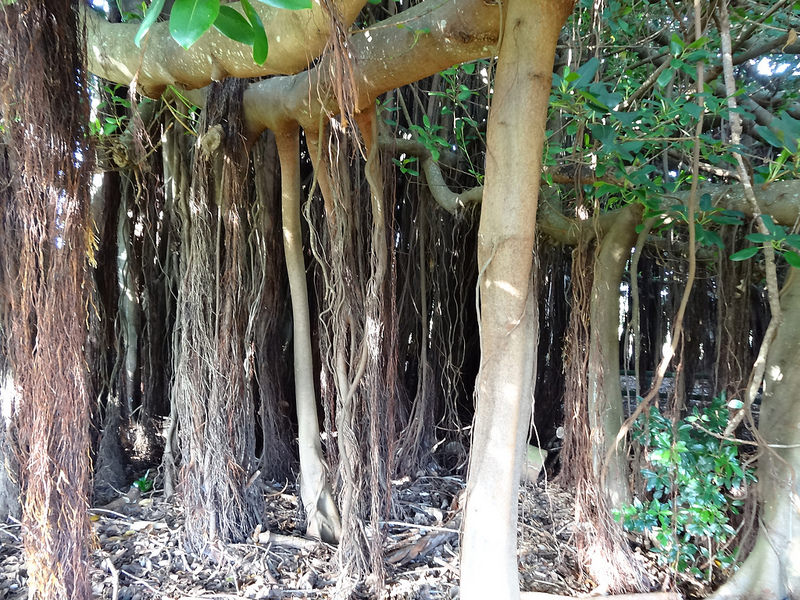 ココ島国立公園の画像4