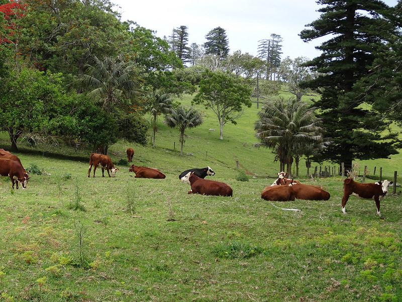 ココ島国立公園の画像9