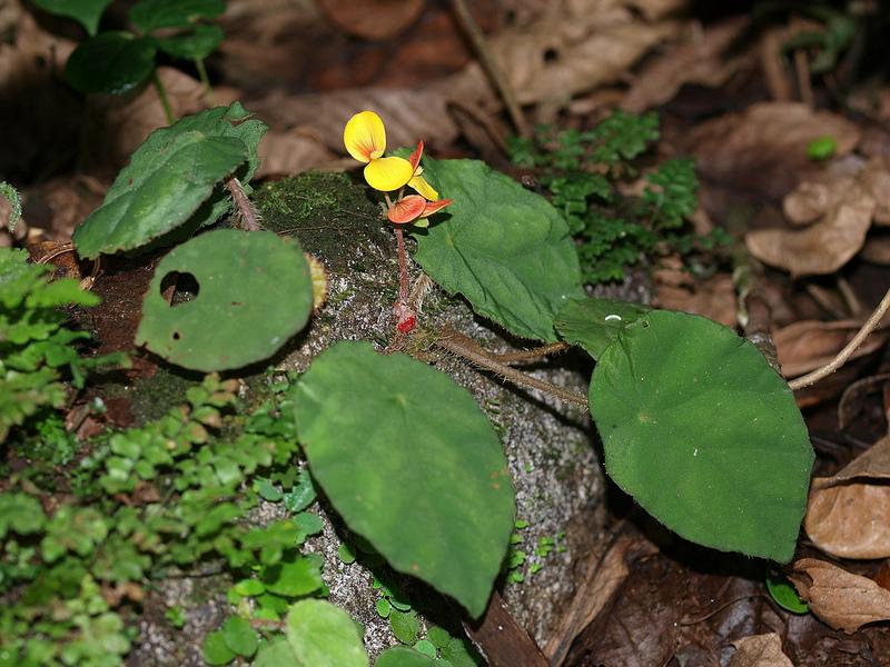 タイ国立公園