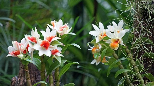 シンガポール植物園の画像12