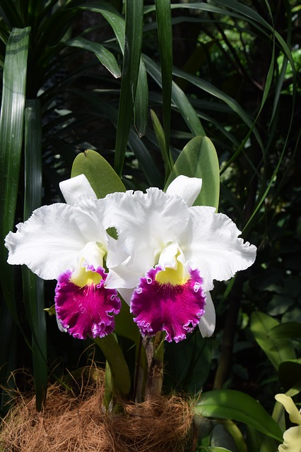 シンガポール植物園の画像14