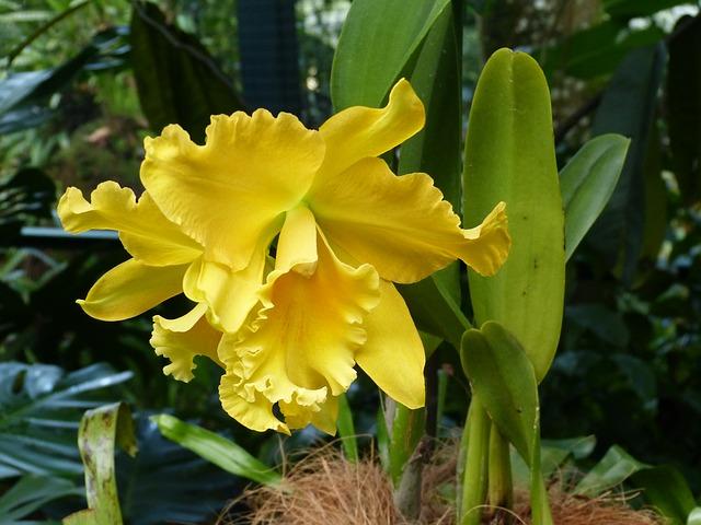 シンガポール植物園の画像17
