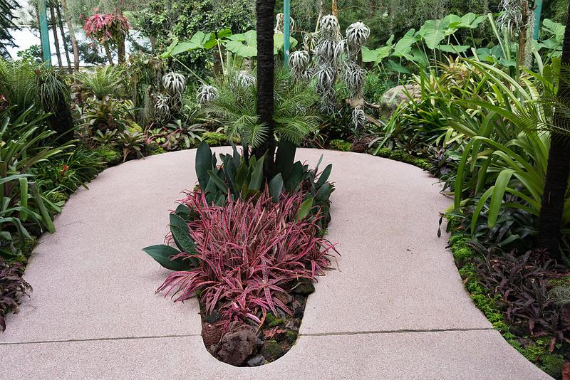 シンガポール植物園の画像23