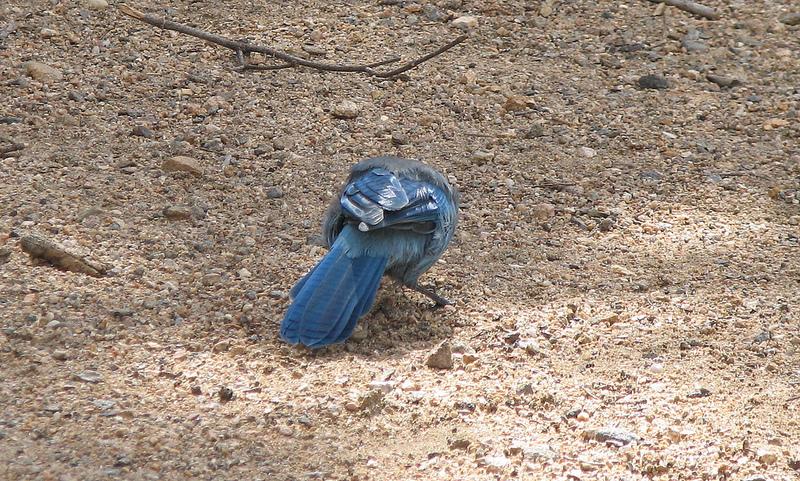 ブルー・アンド・ジョン・クロウ山地の画像2