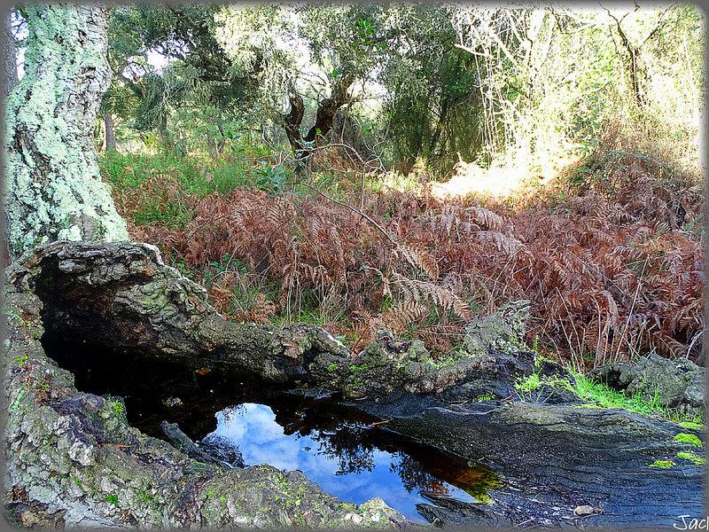 ドニャーナ国立公園の画像5