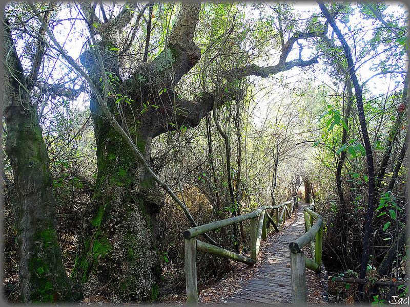 ドニャーナ国立公園の画像7